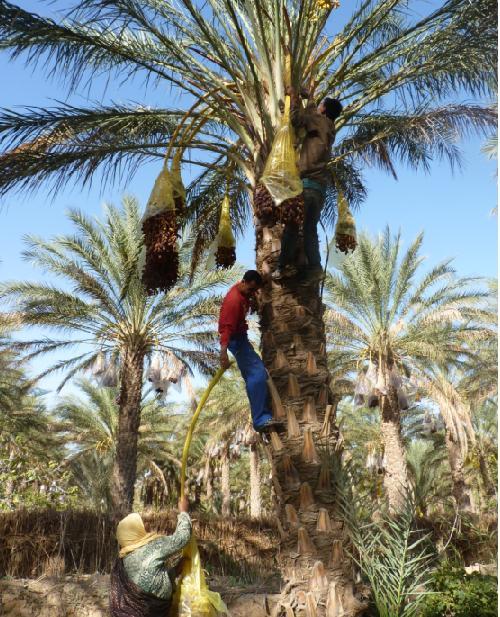 circuit sud Tunisie